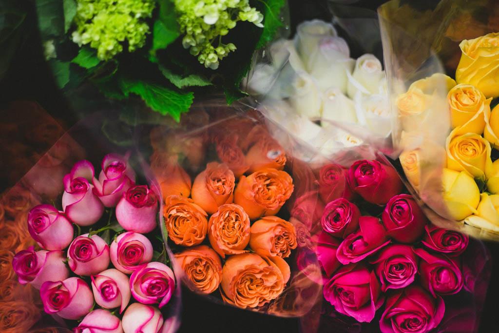 essay-on-roses
