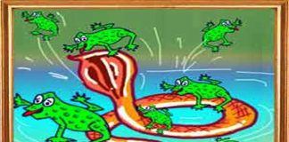 Frogs That Rode A Snake Story