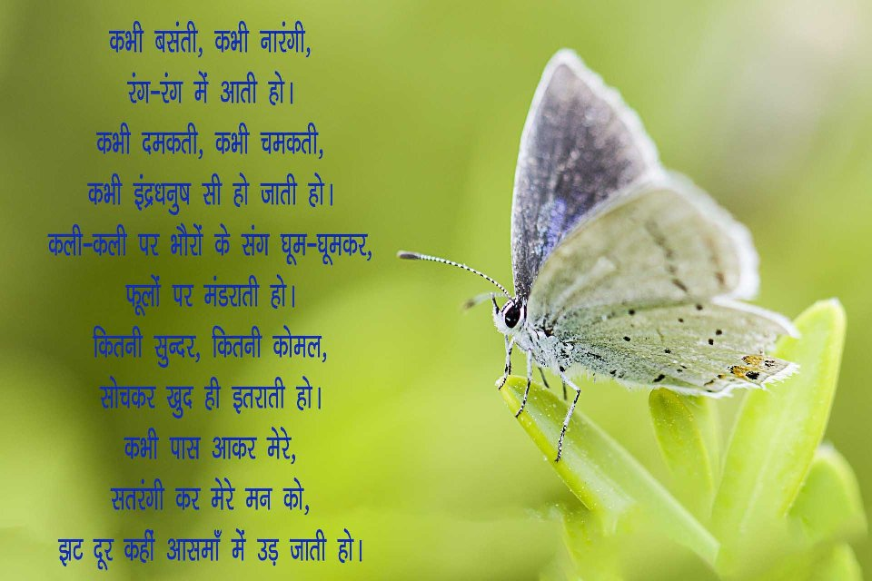 Famous Poem on Butterfly in Hindi