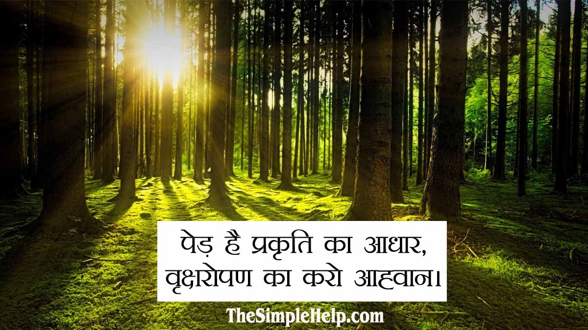 Best Slogans on Save Trees in Hindi