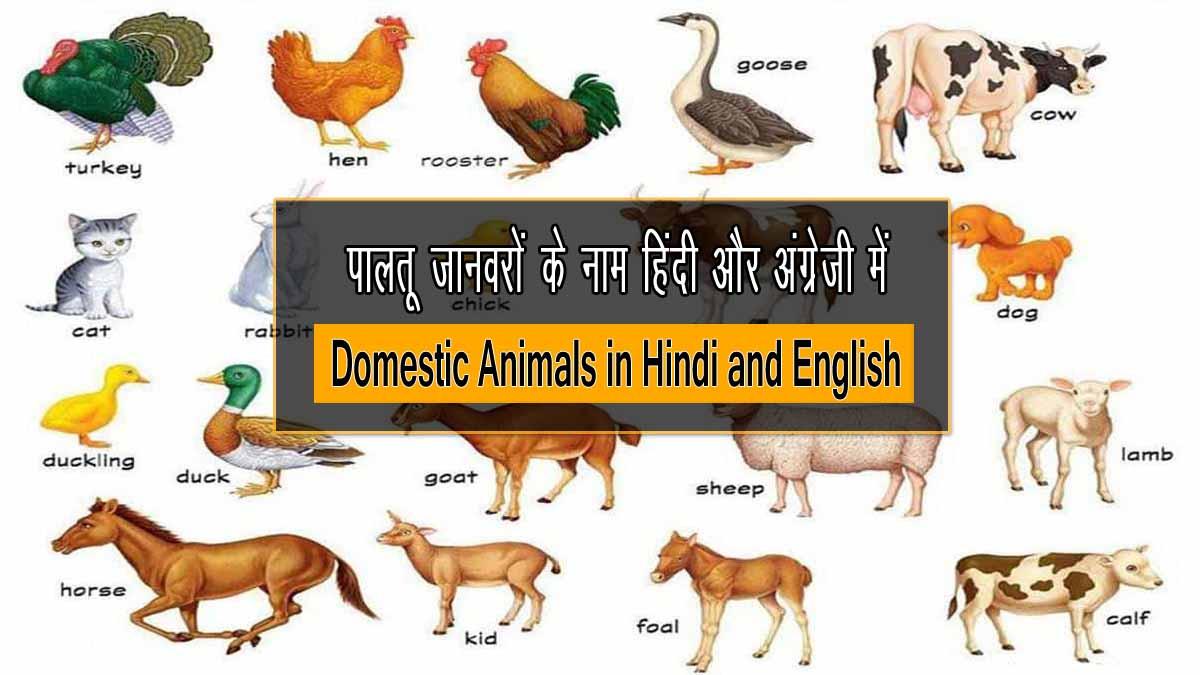 Domestic Animals in Hindi and English