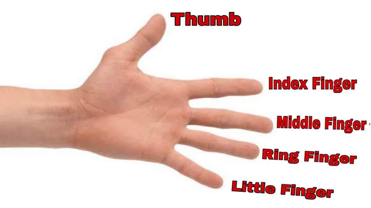 Fingers Name in Hindi and English