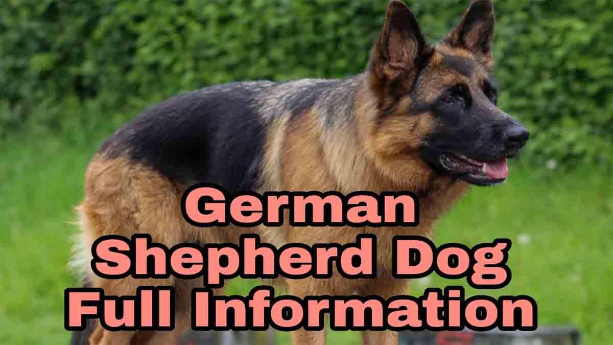 German Shepherd Dog Information in Hindi