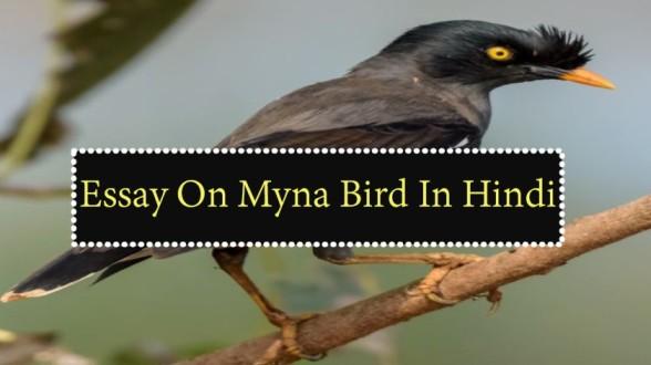 Essay-On-Myna-Bird-In-Hindi