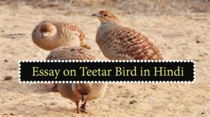 Essay-on-Teetar-Bird-in-Hindi