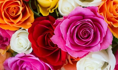 Flower Quotes in Hindi