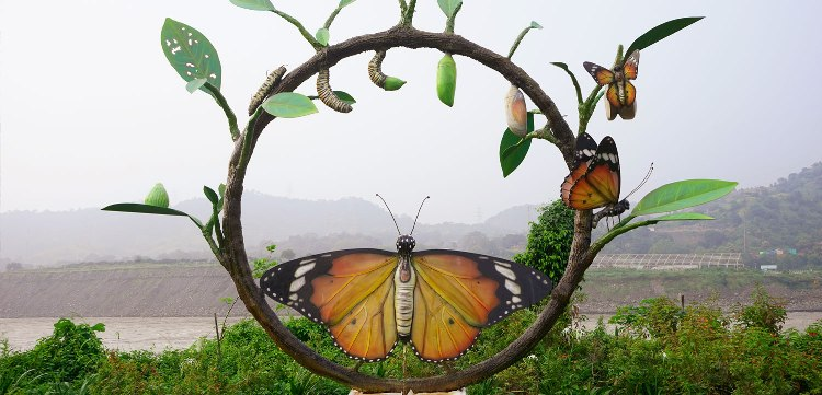 butterfly quotes in hindi