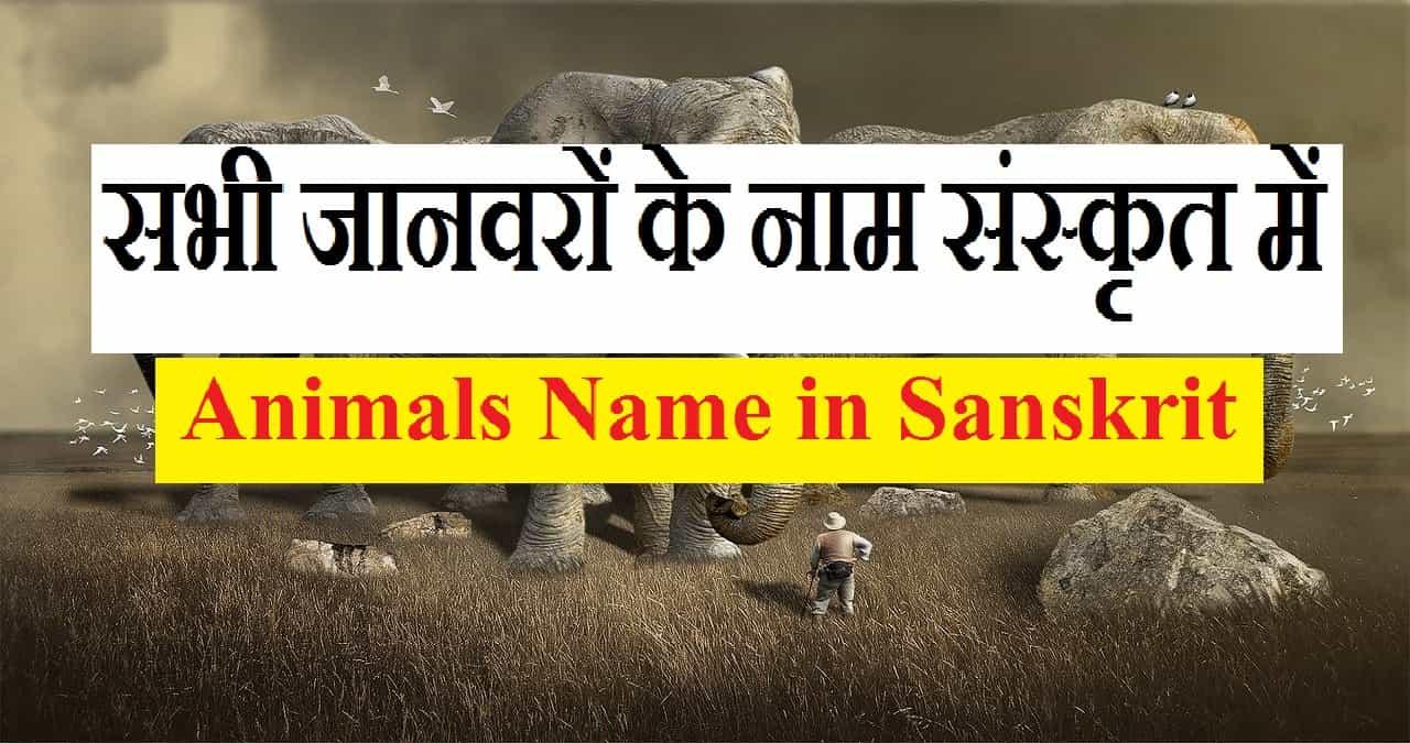 Animals Name in Sanskrit