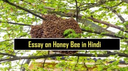 Essay-on-Honey-Bee-in-Hindi